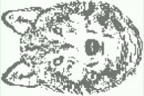 Схема фенечки 30558
